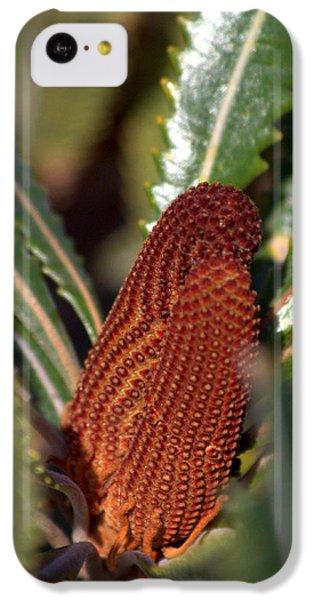 IPhone 5c Case featuring the photograph Banksia by Miroslava Jurcik