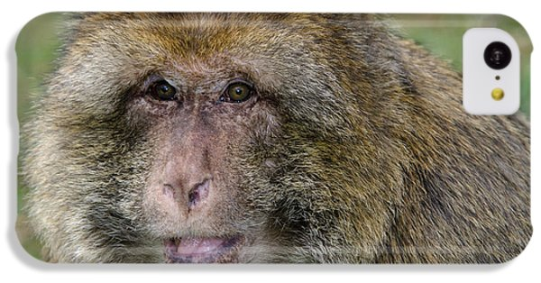 Barbary Macaque IPhone 5c Case by Nigel Downer