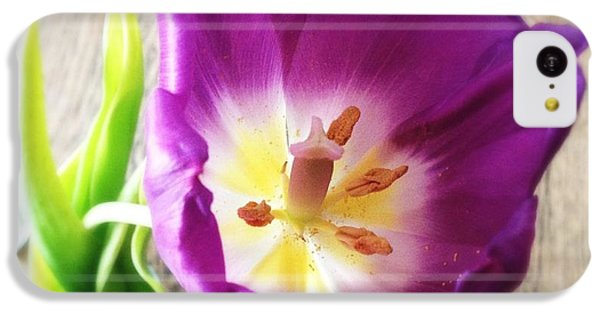 Beautiful iPhone 5c Case - Beautiful Purple Flower From Above by Matthias Hauser