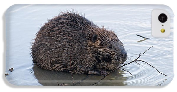 Beaver Chewing On Twig IPhone 5c Case