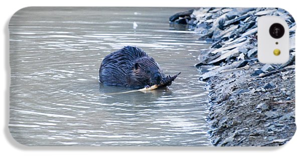 Beaver Chews On Stick IPhone 5c Case
