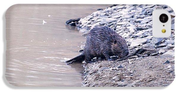 Beaver On Dry Land IPhone 5c Case