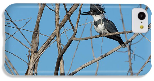 Belted Kingfisher 4 IPhone 5c Case by Ernie Echols