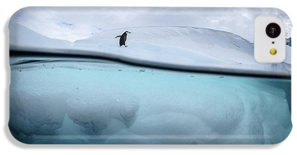 Penguin iPhone 5c Case - Between Two Worlds - Facing Change by Justin Hofman