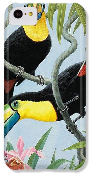 Big-beaked Birds IPhone 5c Case