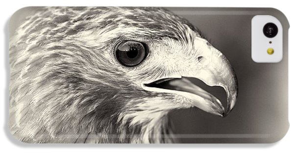 Bird Of Prey IPhone 5c Case by Dan Sproul
