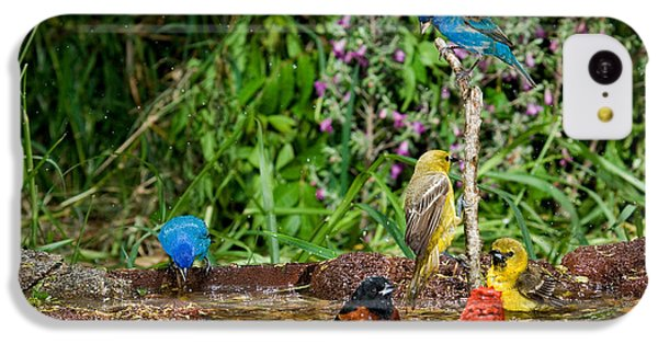 Birds Bathing IPhone 5c Case by Anthony Mercieca