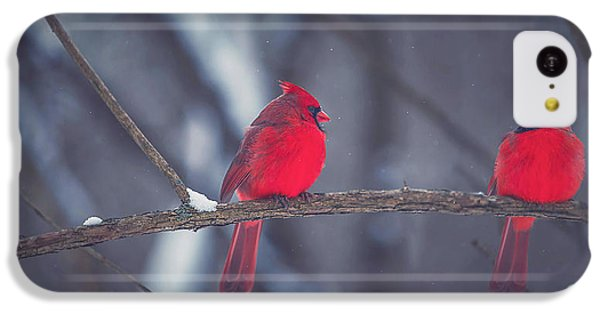 Birds Of A Feather IPhone 5c Case by Carrie Ann Grippo-Pike