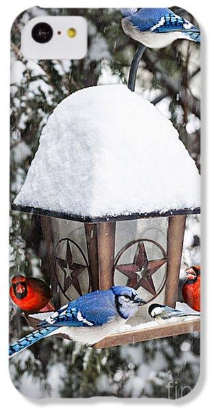 Bluejay iPhone 5c Case - Birds On Bird Feeder In Winter by Elena Elisseeva