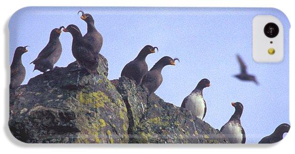 Birds On Rock IPhone 5c Case