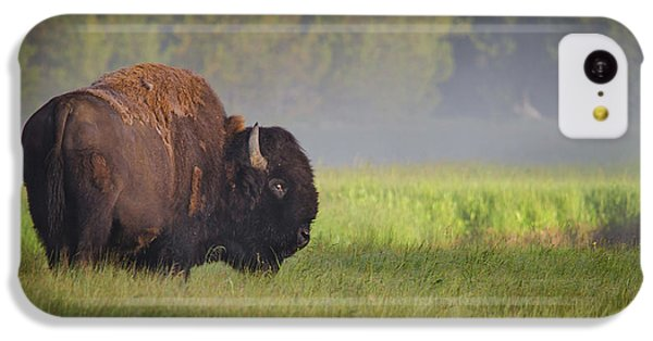 Bison In Morning Light IPhone 5c Case