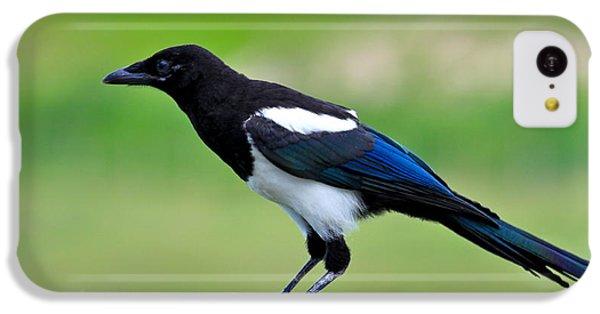 Black Billed Magpie IPhone 5c Case