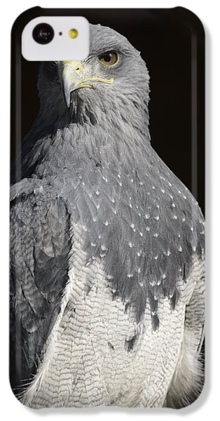 Black Chested Buzzard-eagle No 1 IPhone 5c Case by Andy-Kim Moeller