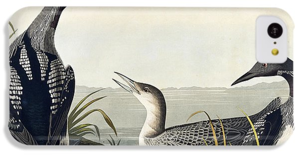 Black Throated Diver  IPhone 5c Case by John James Audubon