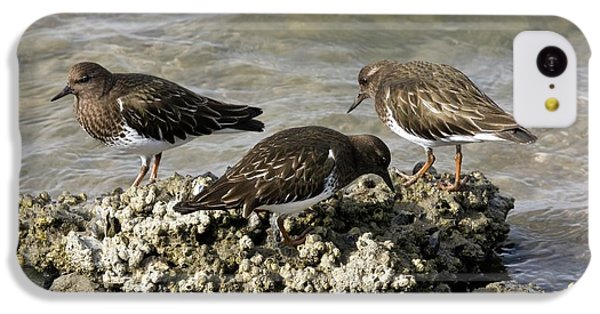Black Turnstones Feeding IPhone 5c Case by Bob Gibbons