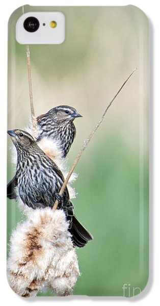 Blackbird Pair IPhone 5c Case by Mike  Dawson