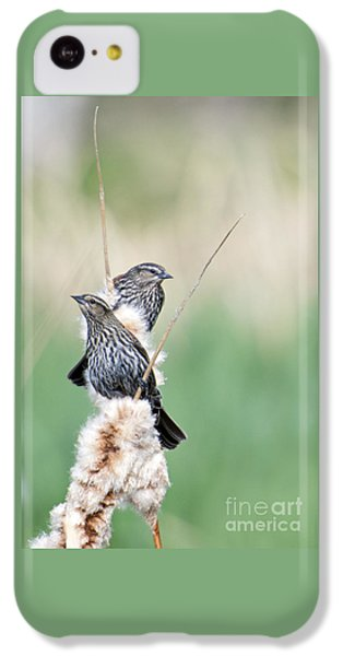 Blackbird Pair IPhone 5c Case