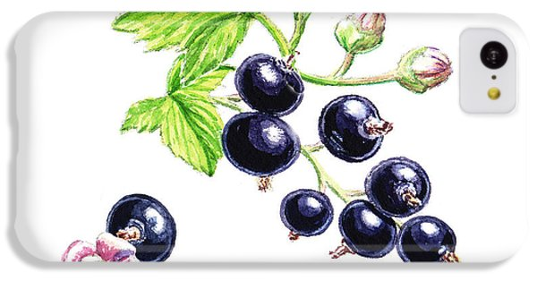 IPhone 5c Case featuring the painting Blackcurrant Botanical Study by Irina Sztukowski