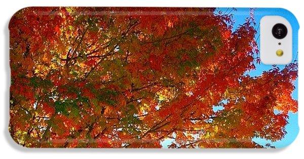 Sunny iPhone 5c Case - Blazing Orange Maple Tree by Anna Porter