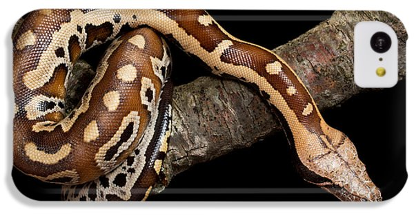 Python iPhone 5c Case - Blood Python Python Brongersmai by David Kenny