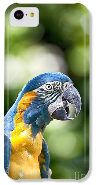 Blue And Gold Macaw V2 IPhone 5c Case by Douglas Barnard
