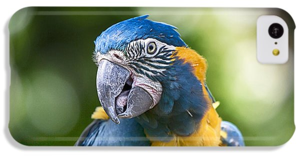 Blue And Gold Macaw V3 IPhone 5c Case
