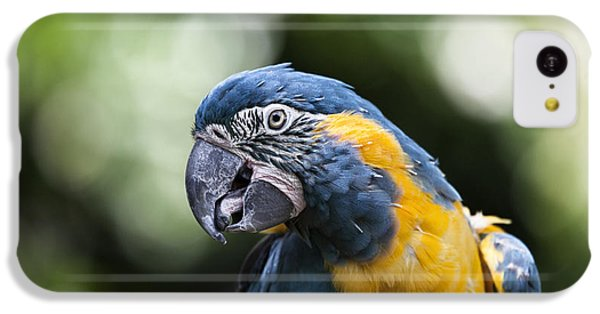 Blue And Gold Macaw V5 IPhone 5c Case by Douglas Barnard