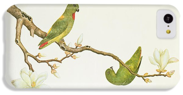 Parakeet iPhone 5c Case - Blue Crowned Parakeet Hannging On A Magnolia Branch by Chinese School