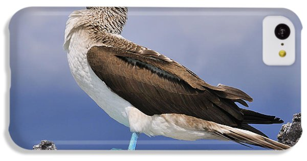 Blue-footed Booby IPhone 5c Case by Tony Beck