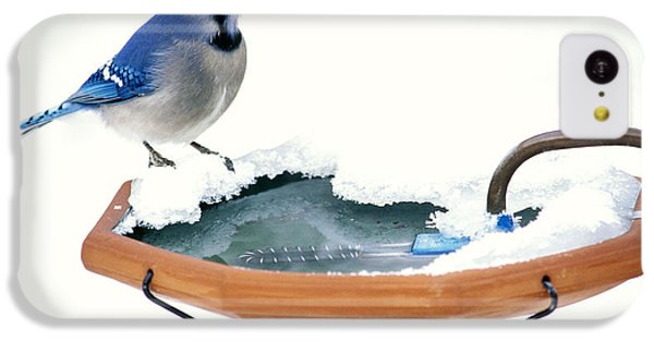 Blue Jay At Heated Birdbath IPhone 5c Case by Steve and Dave Maslowski