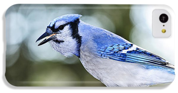 Bluejay iPhone 5c Case - Blue Jay Bird by Elena Elisseeva