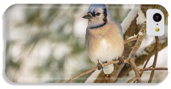 Bluejay iPhone 5c Case - Blue Jay by Everet Regal