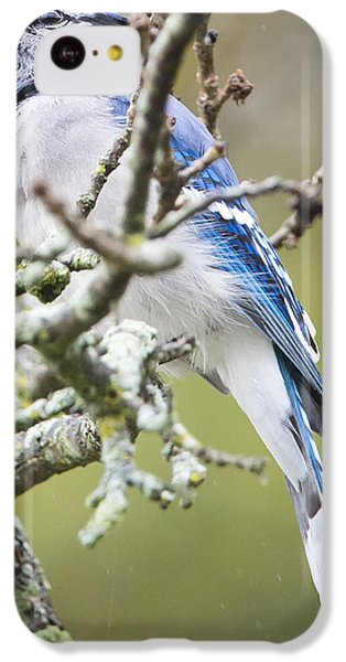 Blue Jay In The Rain IPhone 5c Case