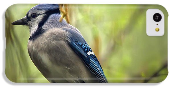 Blue Jay On A Misty Spring Day IPhone 5c Case by Lois Bryan