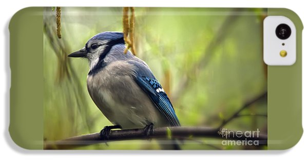 Blue Jay On A Misty Spring Day IPhone 5c Case