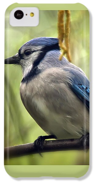 Blue Jay On A Misty Spring Day - Square Format IPhone 5c Case