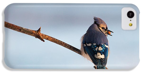 Blue Jay With Nuts IPhone 5c Case by Everet Regal