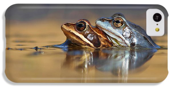 Blue Love ... Mating Moor Frogs  IPhone 5c Case by Roeselien Raimond