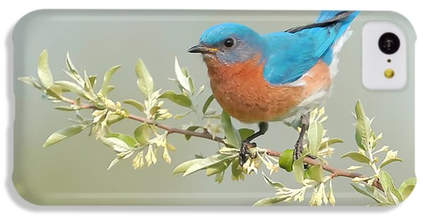 Bluebird iPhone 5c Case - Bluebird Floral by William Jobes
