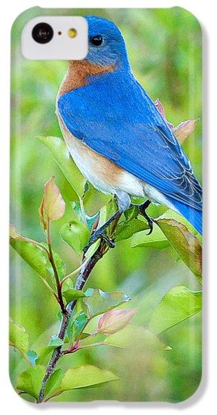Bluebird iPhone 5c Case - Bluebird Joy by William Jobes