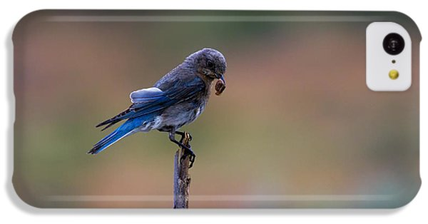 Bluebird Lunch IPhone 5c Case by Mike  Dawson