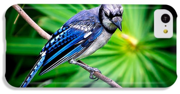 Thoughtful Bluejay IPhone 5c Case