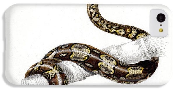 Boa Constrictor IPhone 5c Case by Collection Abecasis