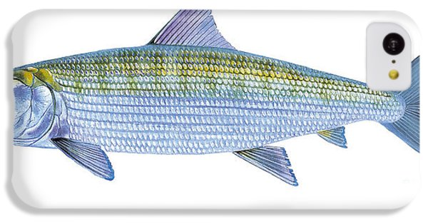 Drum iPhone 5c Case - Bonefish by Carey Chen