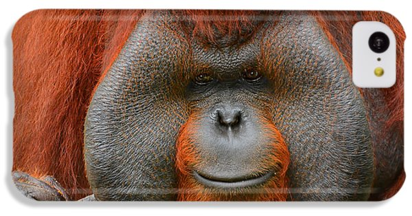 Bornean Orangutan IPhone 5c Case by Lourry Legarde