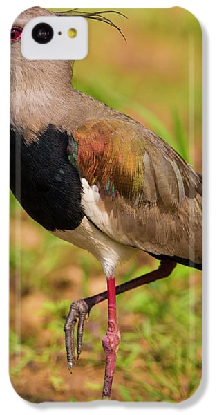 Lapwing iPhone 5c Case - Brazil A Southern Lapwing (vanellus by Ralph H. Bendjebar