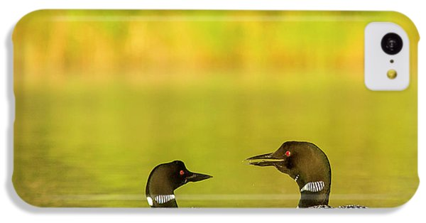 Loon iPhone 5c Case - Breeding Pair Of Common Loons by Chuck Haney