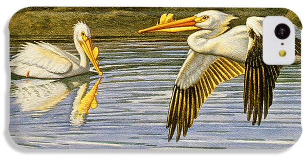 Pelican iPhone 5c Case - Breeding Season- White Pelicans by Paul Krapf