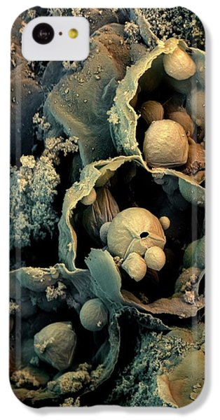Broccoli IPhone 5c Case by Stefan Diller