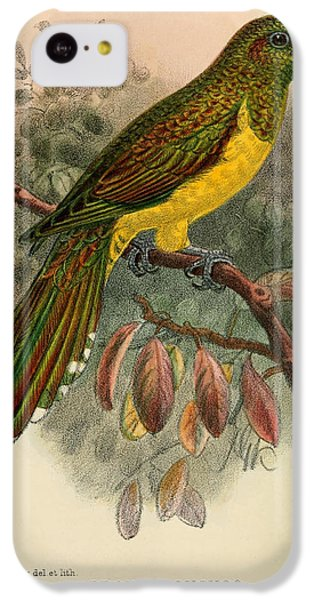 Cuckoo iPhone 5c Case - Bronze Cuckoo by Dreyer Wildlife Print Collections